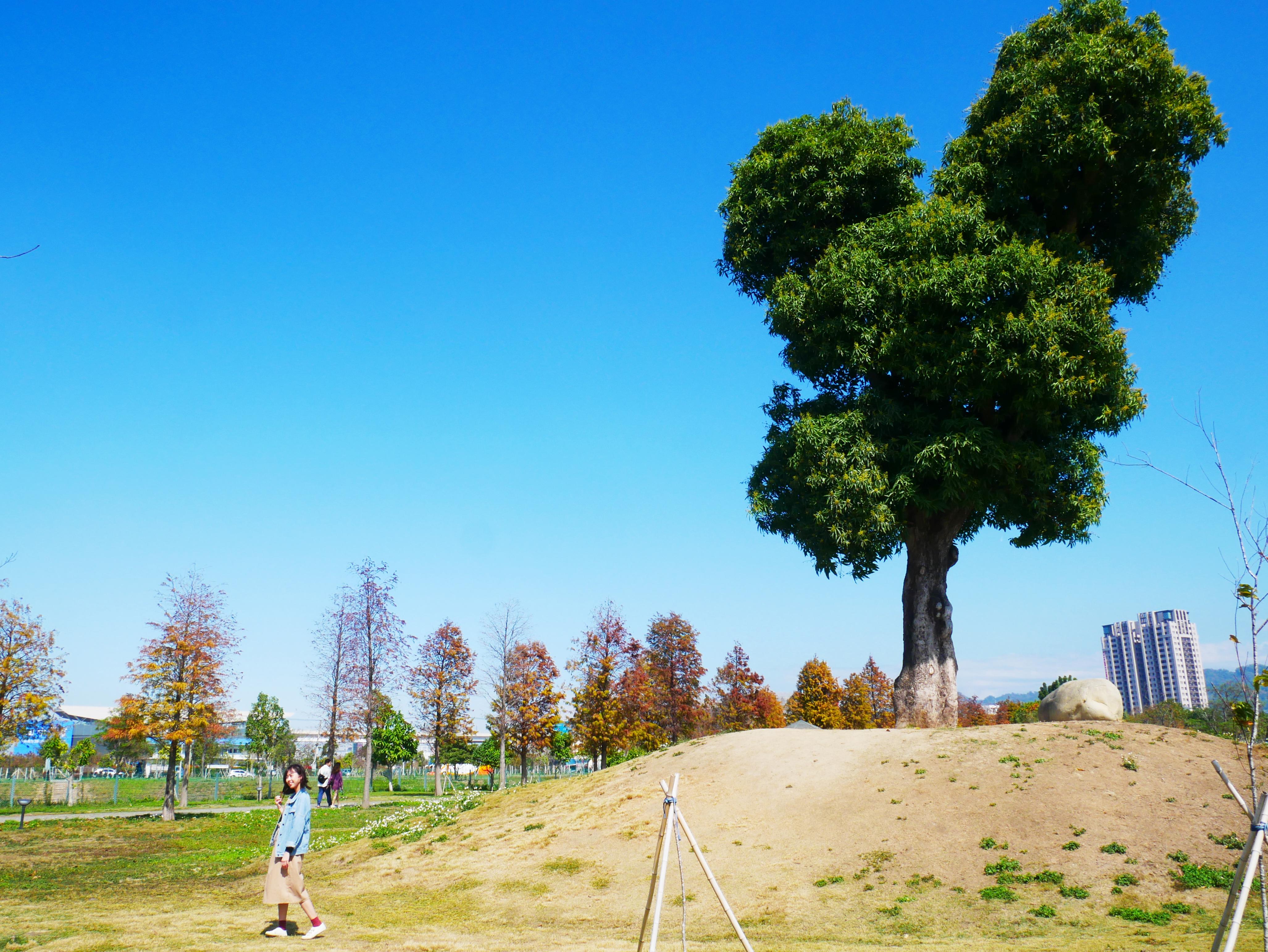 圖片:清明連假一起來郊遊~ 北屯米奇樹、夢幻海天橋私房景點報你知!