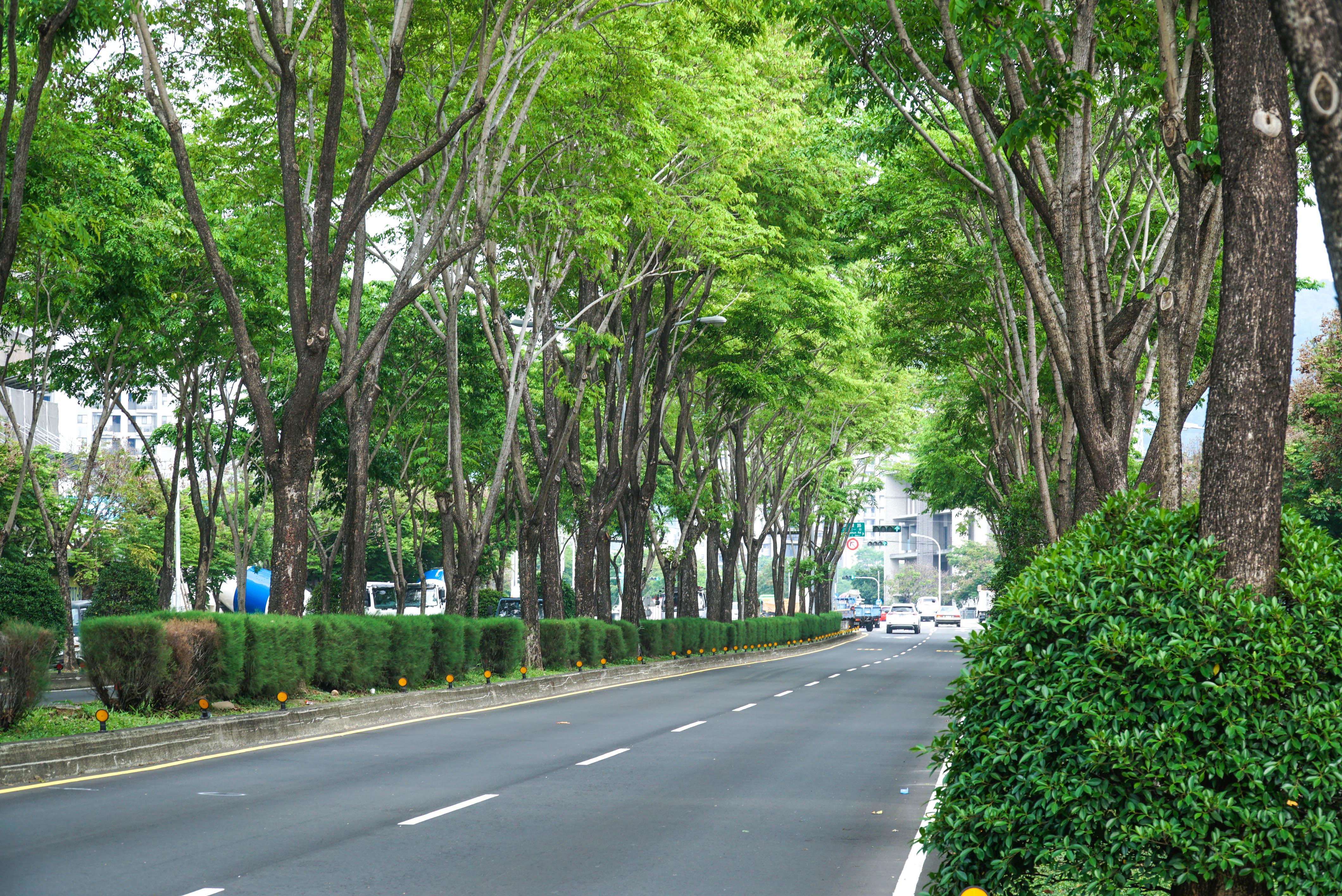 圖片:台中北屯新建案 | 鴻邑璞臻。置身於一片蓊鬱蒼翠的林蔭大道,優美如畫